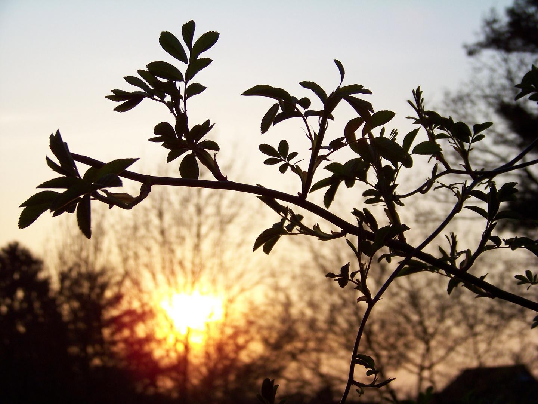 Aprilsonne