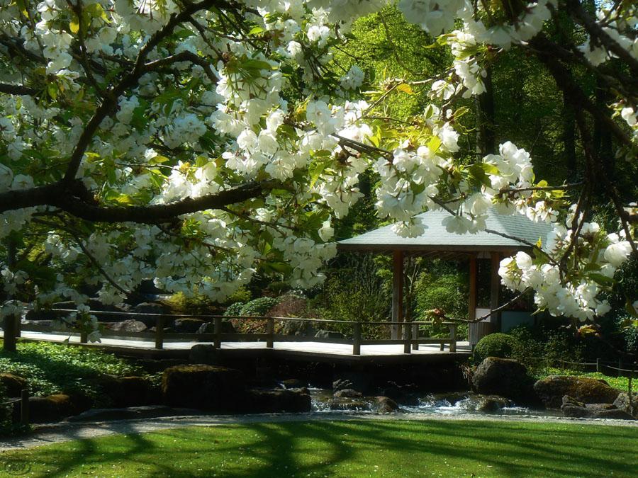 Apriltag im Japanischen Garten...(2)