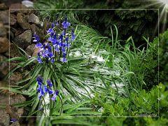 Aprilwetter im Garten