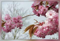 Aprilwetter im Garten - Original