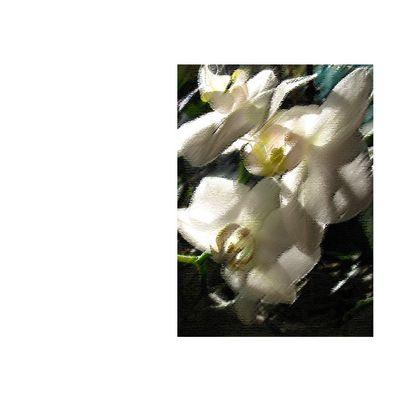 Aquarellflowers