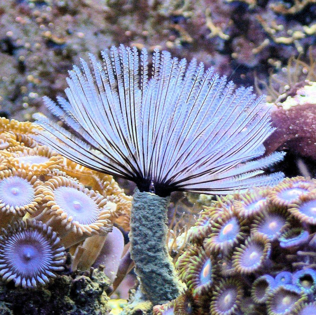 Aquaristikfotografie