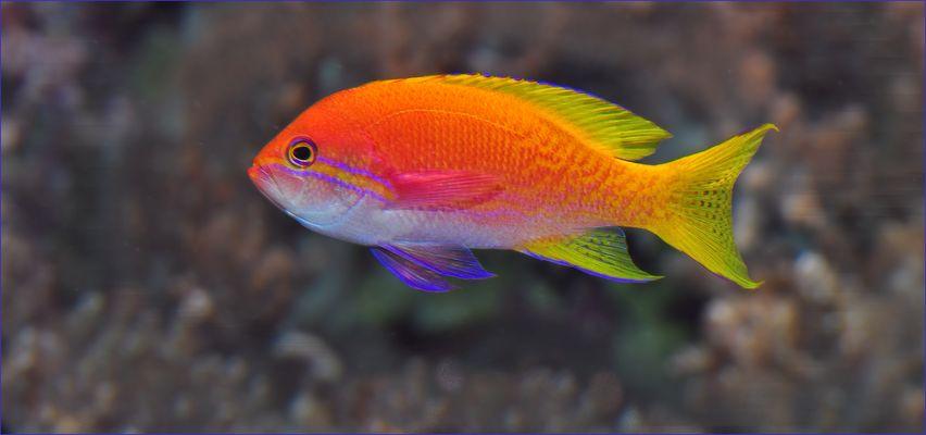 Salzwasserfische fotos bilder auf fotocommunity for Salzwasser aquarium fische