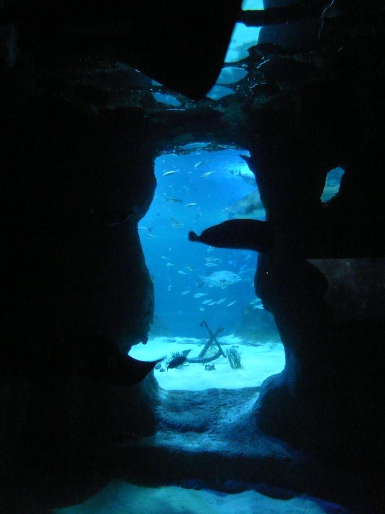 aquarium donostia 2