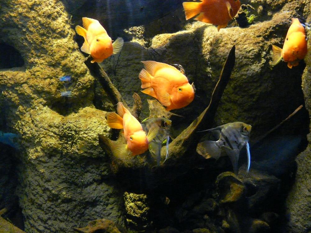 aquarium donostia 3