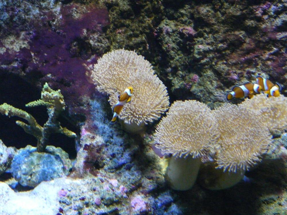 aquarium donostia 4