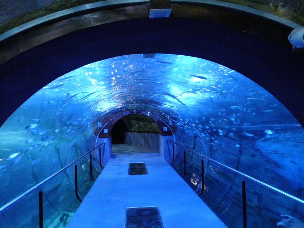 Aquarium donostia imagen foto bajo el agua - Aquarium donosti precio ...