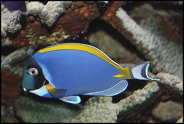 Aquarium Düsseldof 1