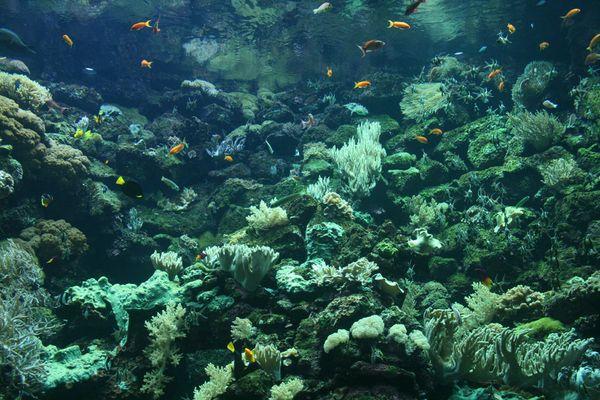 Aquarium Loro Parque