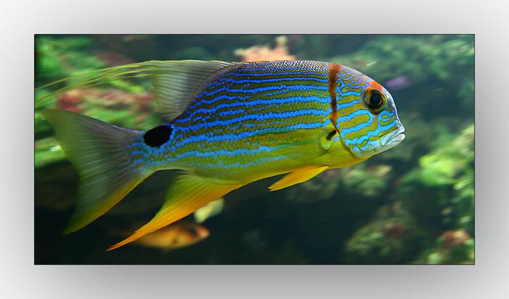 Aquarium Muc - wer kennt ihn ?