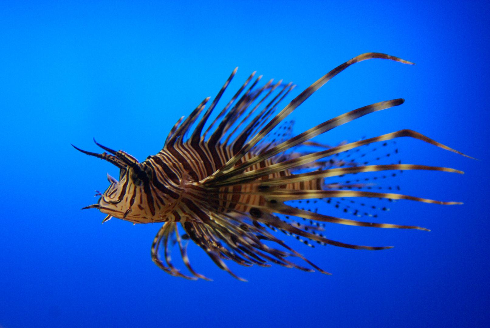 Aquarium Teneriffa Loro-Park