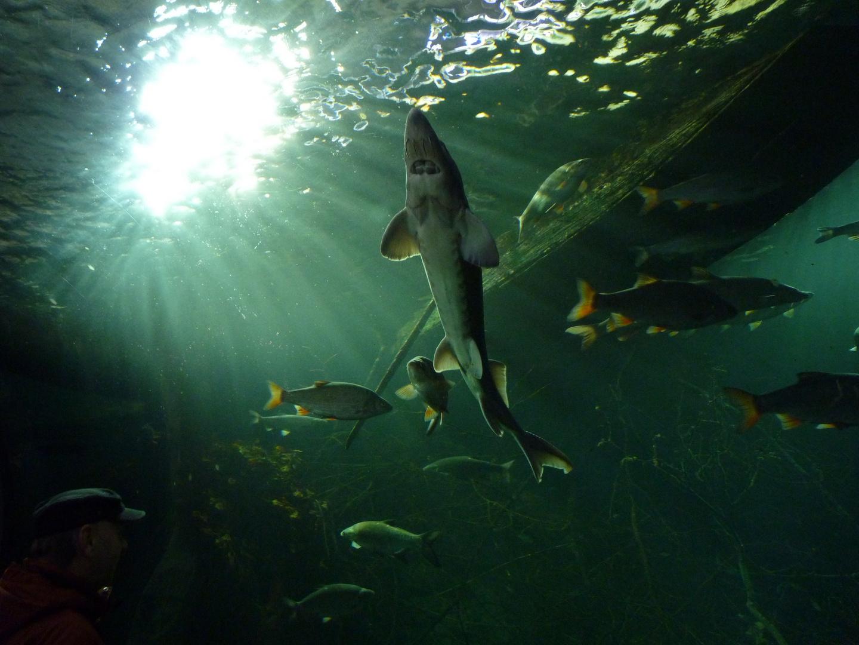 Aquarium Ulm