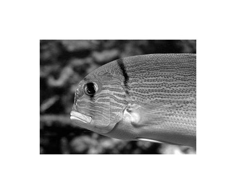 Aquariumfisch.