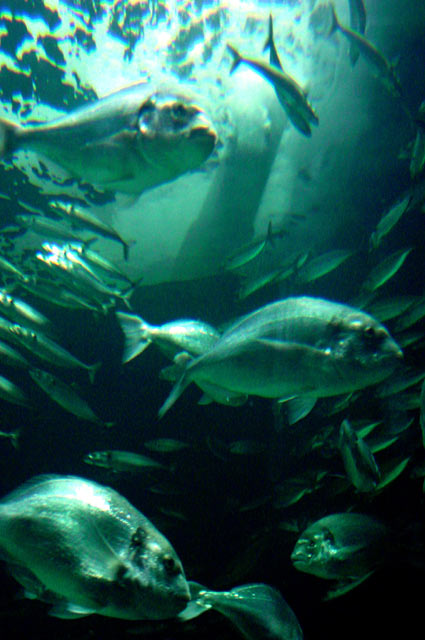 Aquarium_London