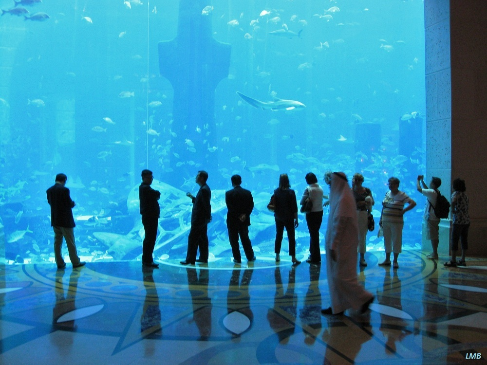 Aquariums - so large as houses