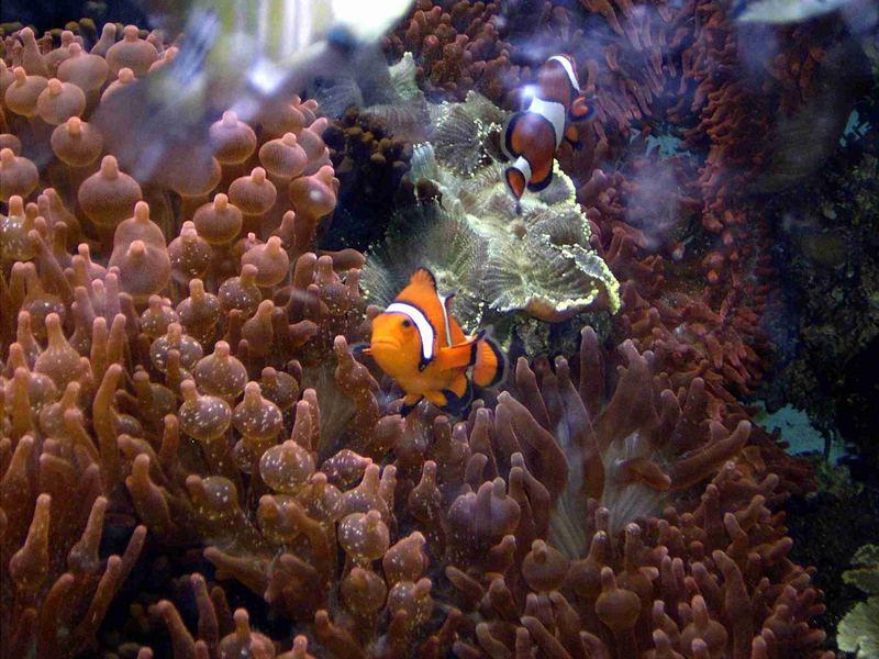 Aquarium(Wilhelma)