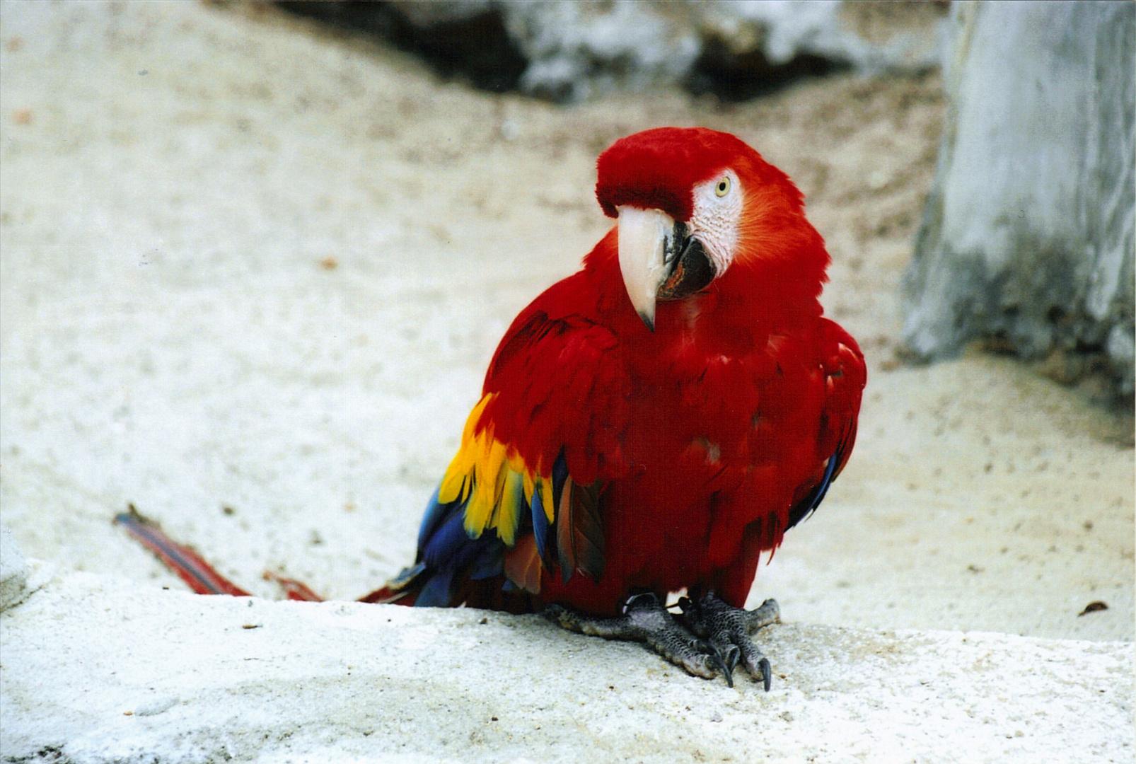 Ara, zoo de la palmyre