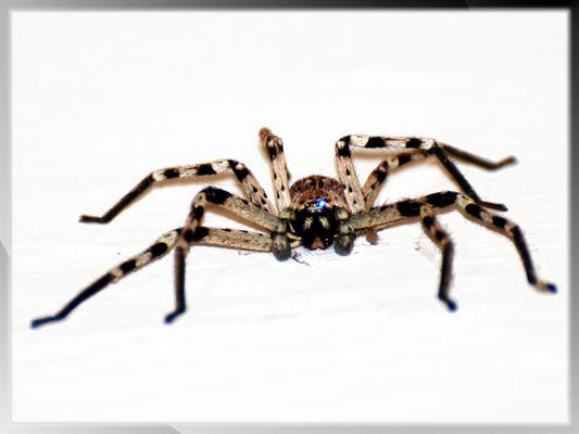 Araña amable!