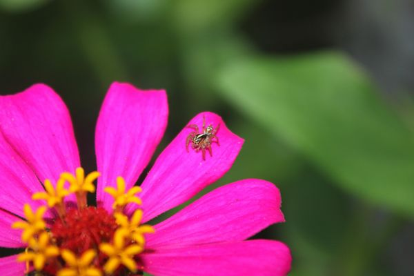 Araña curiosa