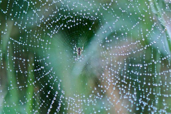 Araña en un dia de lluvia