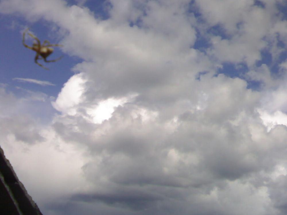 Araña tejiendo el cielo