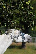 Araber unterm Birnbaum