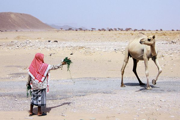 Arabia felix - 6 -