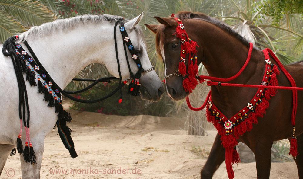 [ARABIAN HORSES]
