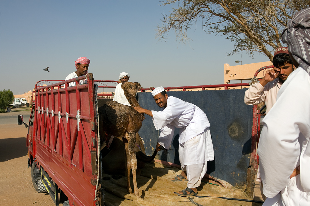 Arabian Scenes 4