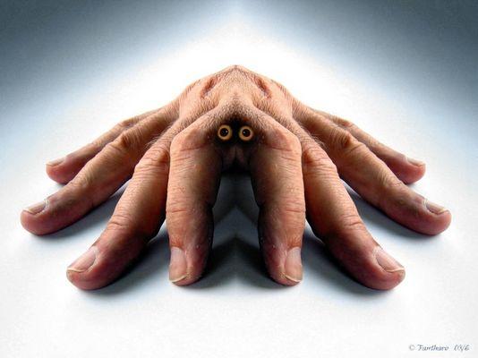 Arachnea Digitalis (Fingerspinne)