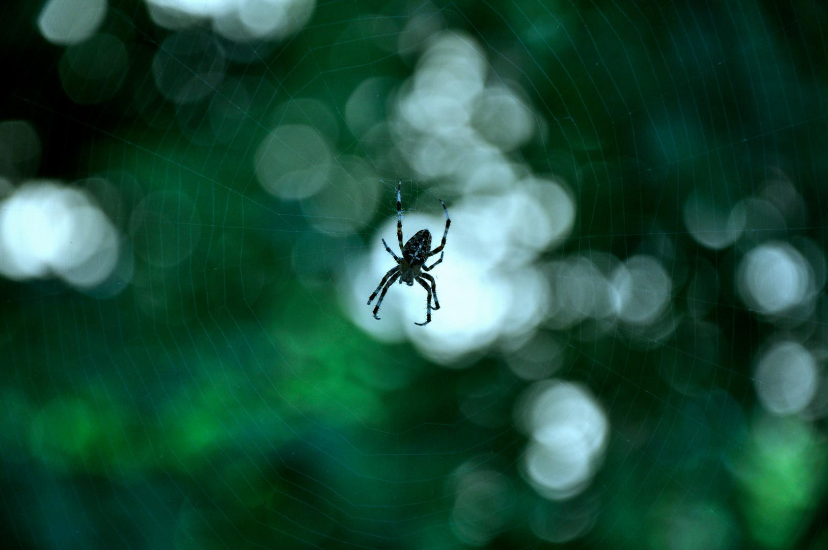 Arachnoa