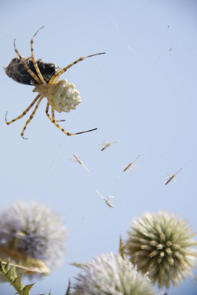 Arachnophiler Klettermax