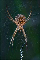 Arachnophobie ...