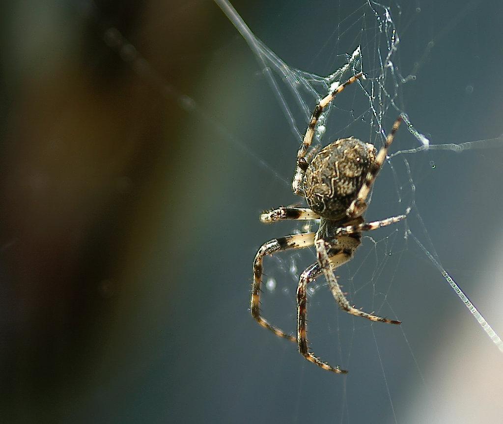 .....Arachnophobie