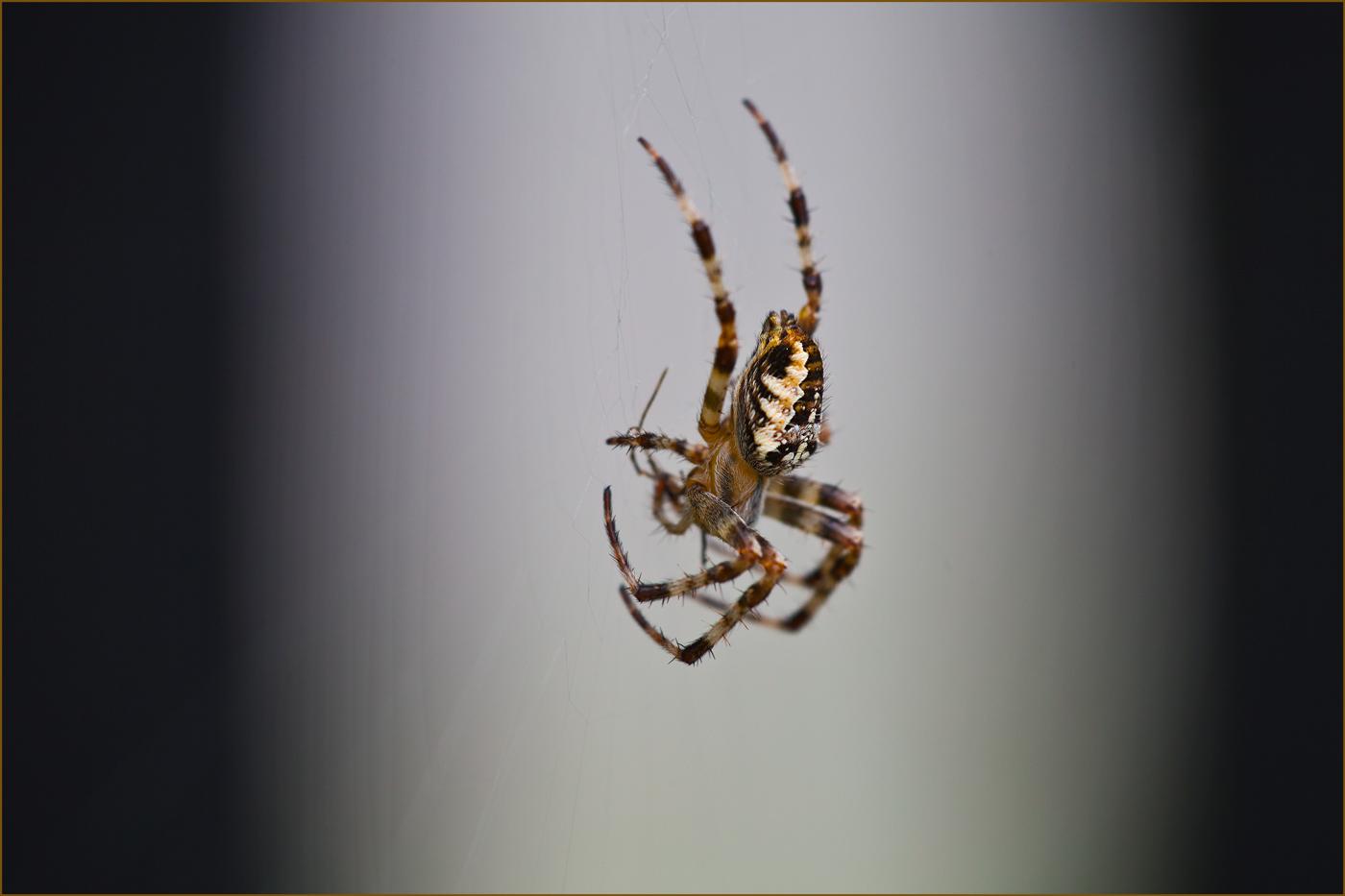 Arachnophobie hab ich sicher nicht .... denke ich.