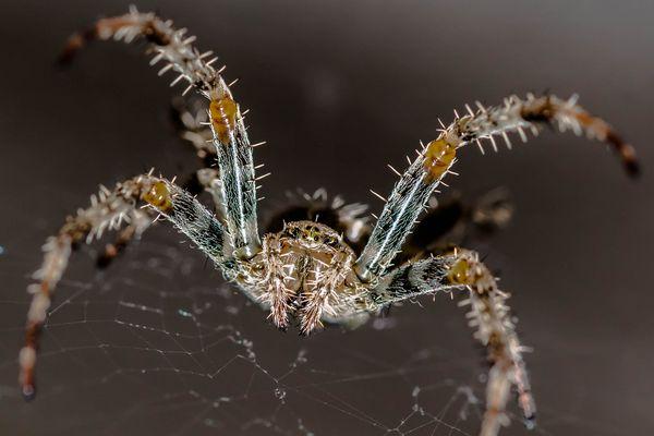 Araignée 2