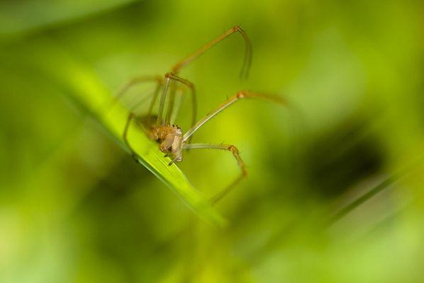 Araignée abstraction