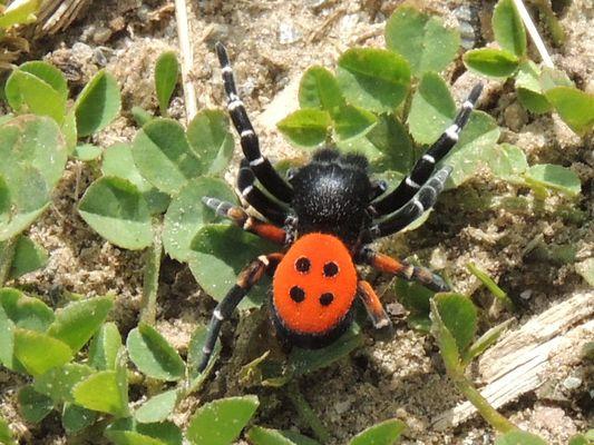 Araignée dans le parc national des Cévennes