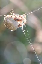 araignée du matin....