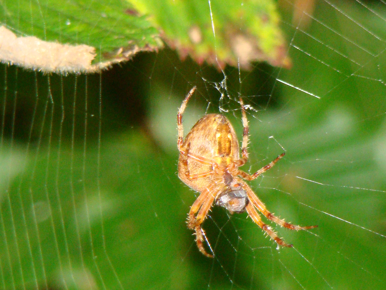araignée en foret