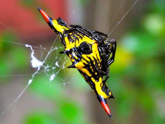 Araignée ou pas ?