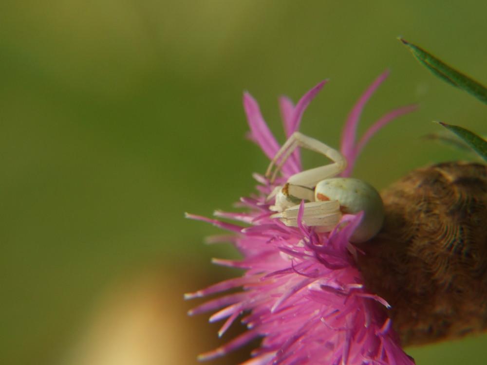 araignée prête à l'attaque