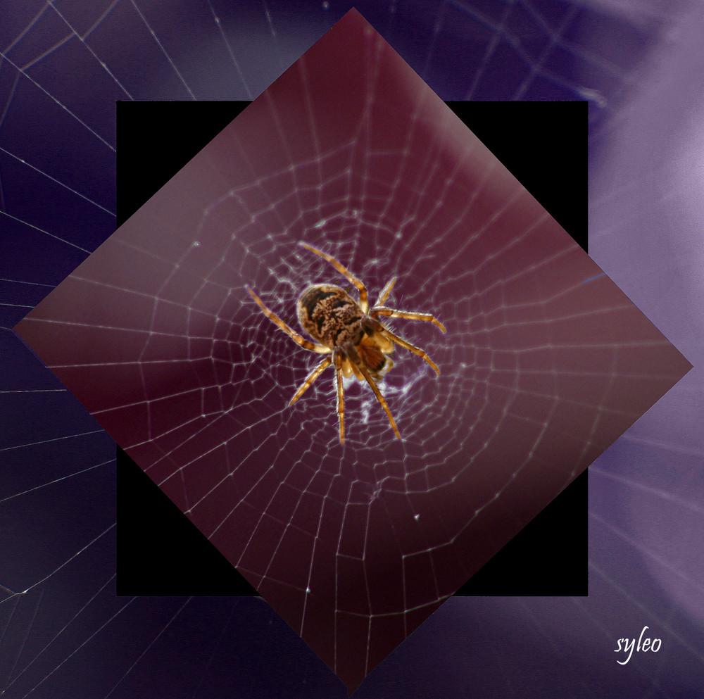 araignus hypnotisus