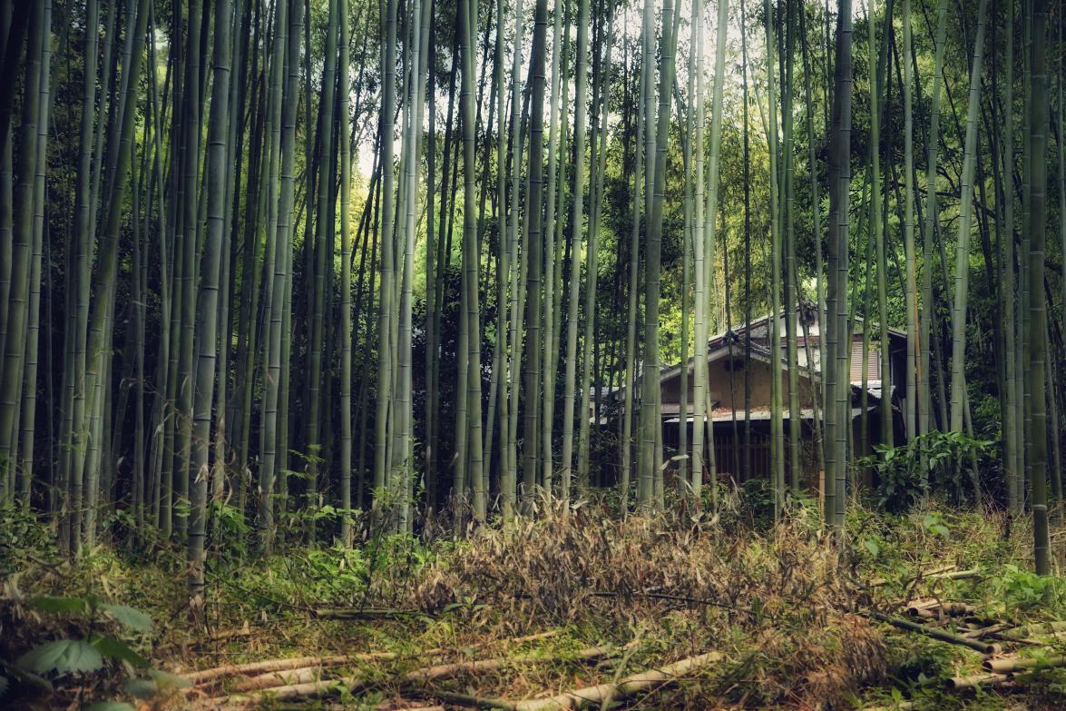 Arashiyama Bambus Wald