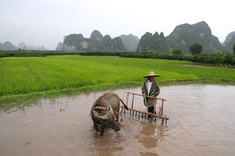 Arbeit auf dem Reisfeld