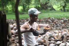 Arbeiter  Kokosnuss +worksongs SriLanka
