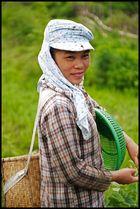 Arbeiterin in der Nähe von Sapa, Vietnam 2012