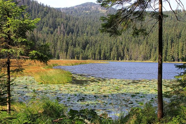 Arbersee letzte Woche