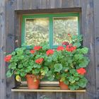 Arberwald, Fenster am Schwellhäusl