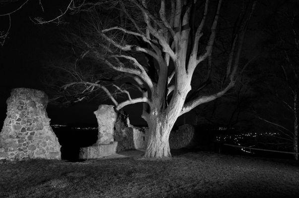 Arbol de noche